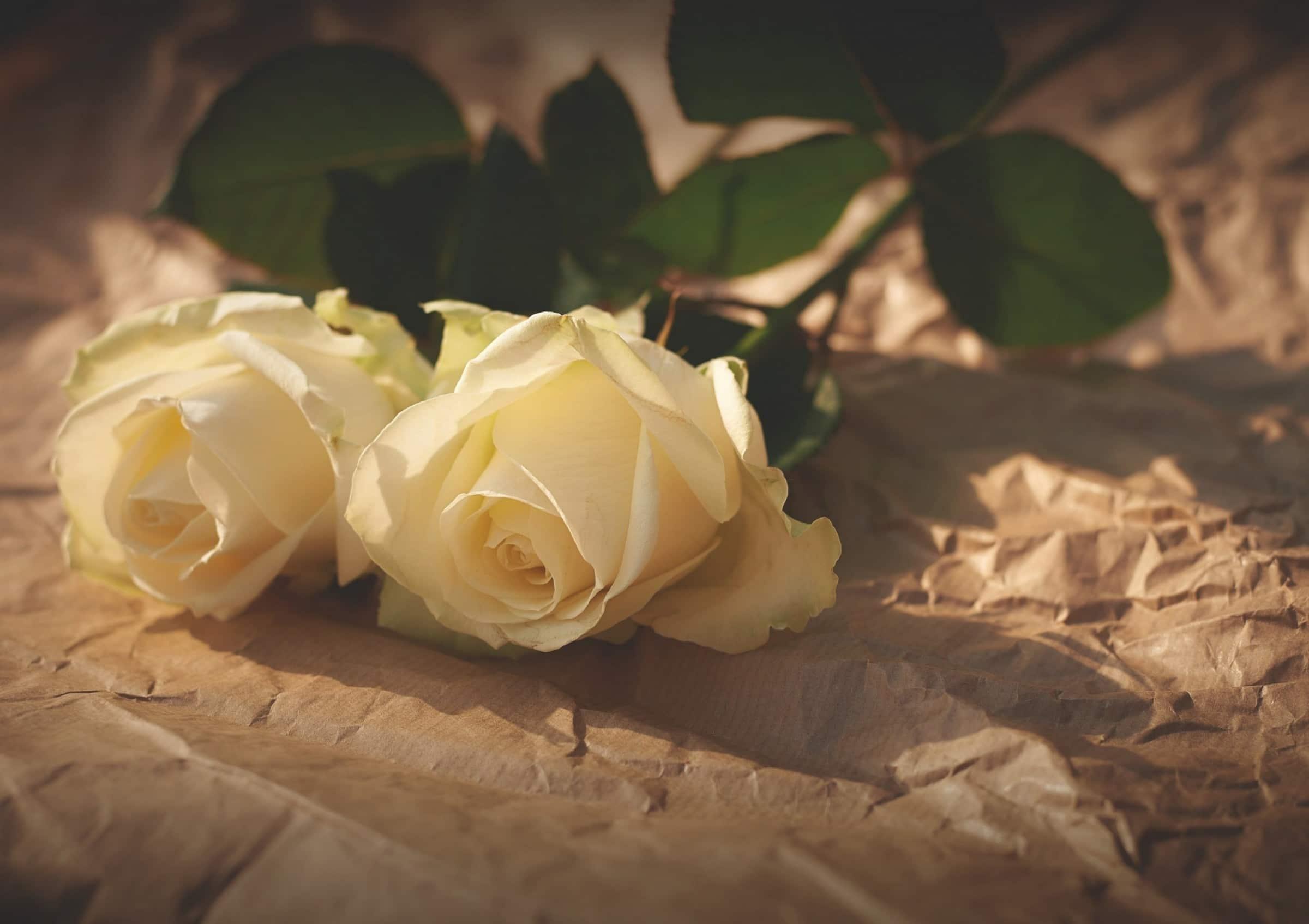 How to plan a Same-Sex Wedding?